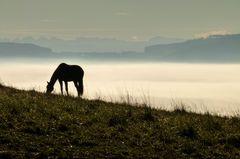 Pferd im Morgenlicht