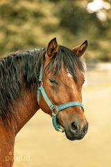 Pferd im Nieselregen