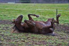 Pferd im Schlamm II