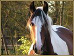 Pferd im Seitenlicht
