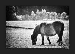 Pferd in Bayern 01