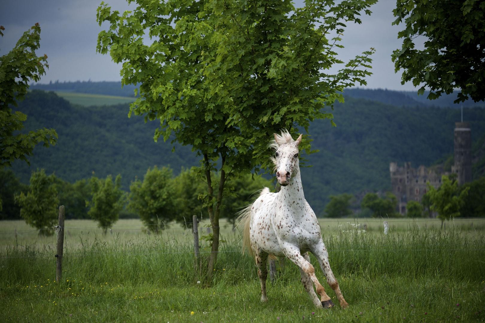 Pferd in Bewegung