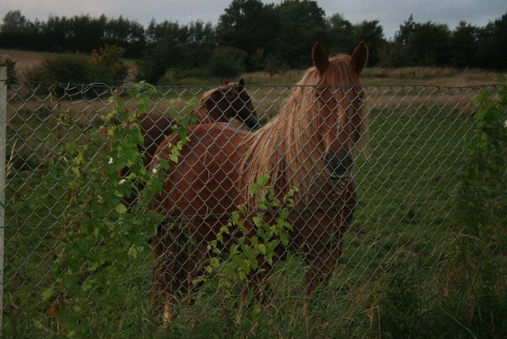 Pferd in der Abenddämmerung