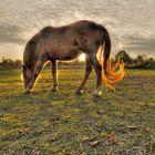 Pferd in der Abendsonne
