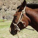 Pferd in der Geierschlucht