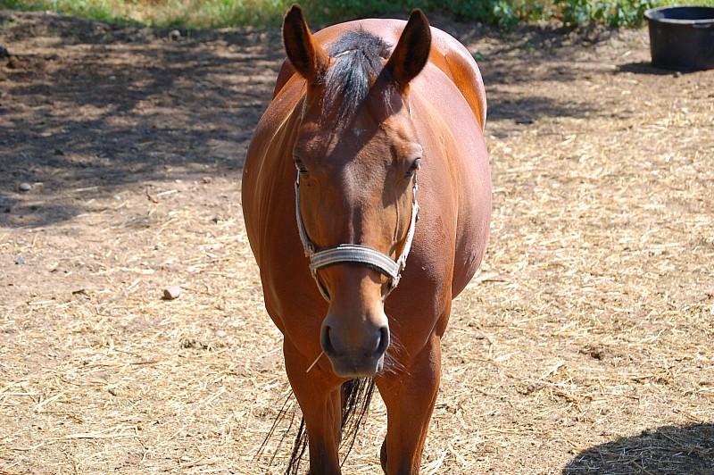Pferd in Front