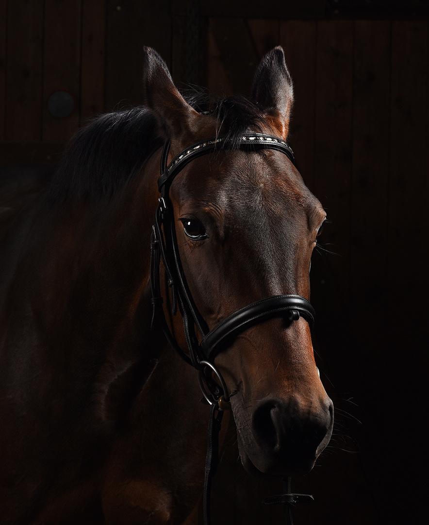 """Pferd """"Luna"""" als Model"""