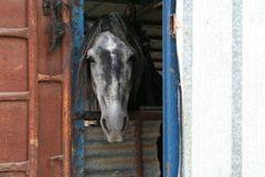 Pferd mit Durchblick