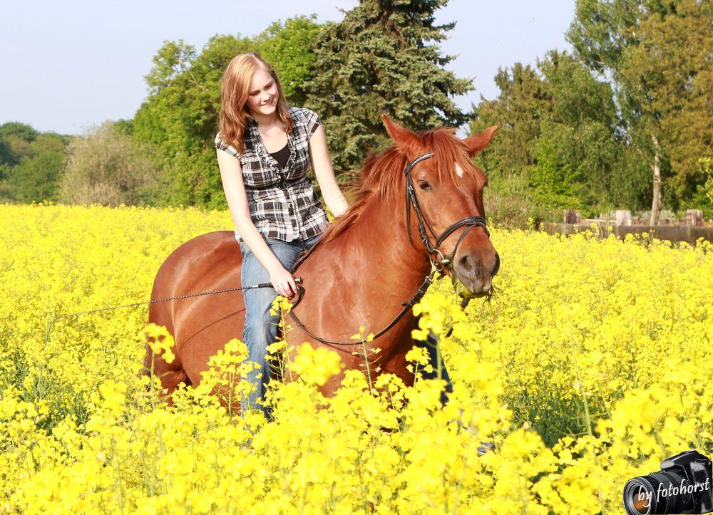 pferd mit reiterin im rapsfeld foto  bild  anfängerecke