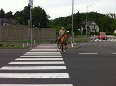 Pferd mit Zebrastreifen