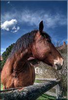 Pferd - Pseudo HDR