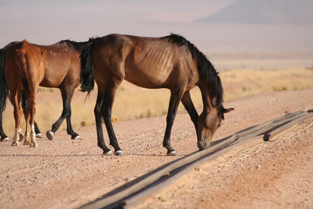 Pferd & Technik