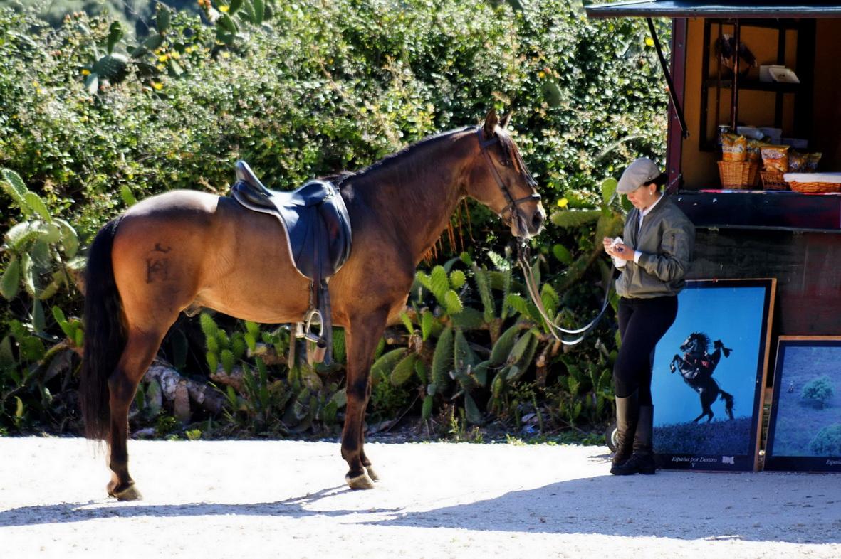 Pferd und Reiterin in Andalusien