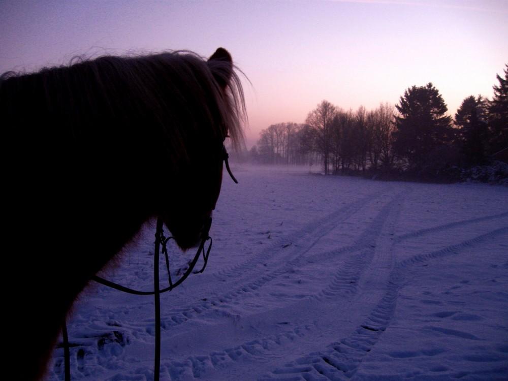 Pferd Winter BIld