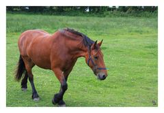 Pferdchen lauf