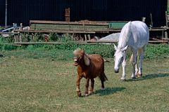Pferde-1