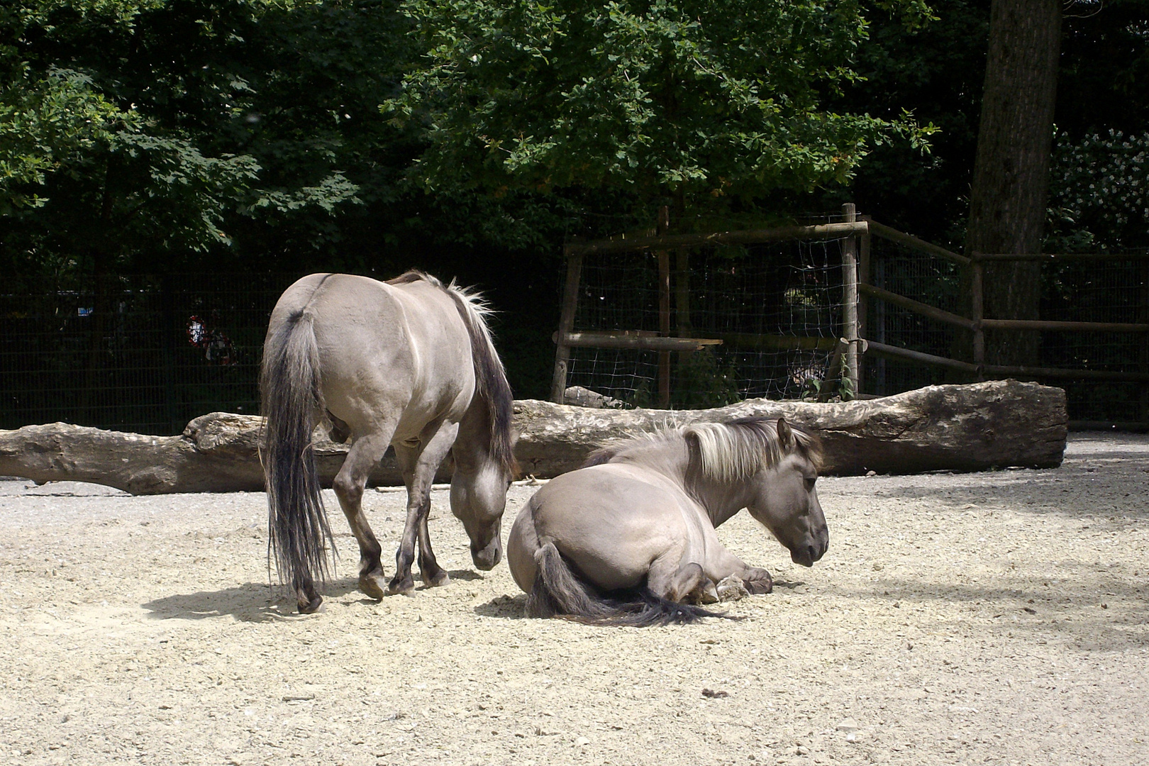 Pferde - 2