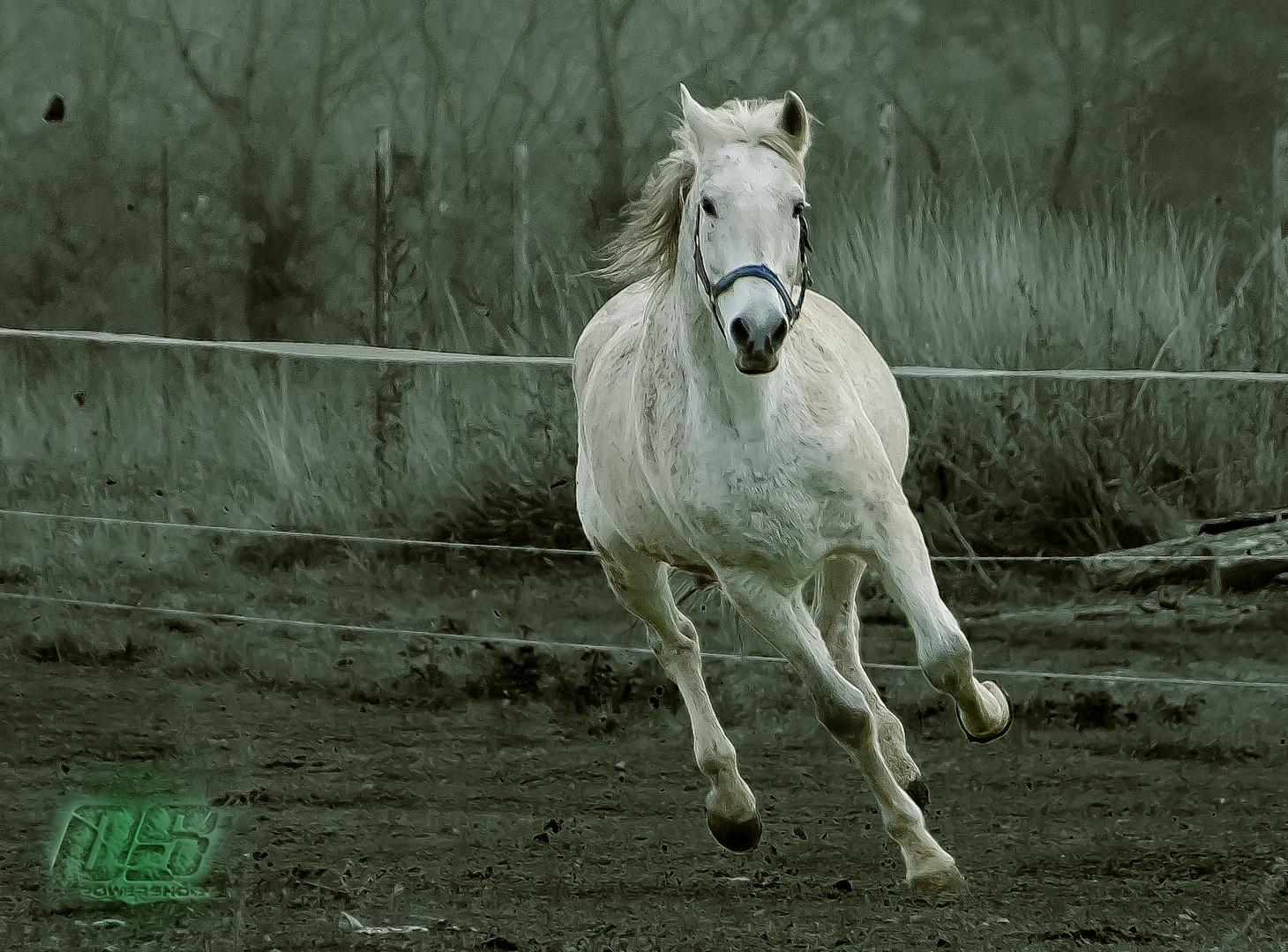 Pferde 4