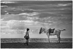 Pferde am Strand in Indien 1