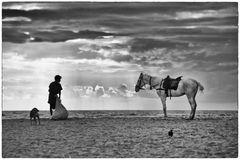 Pferde am Strand in Indien 2