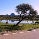 Pferde am Strassenrand