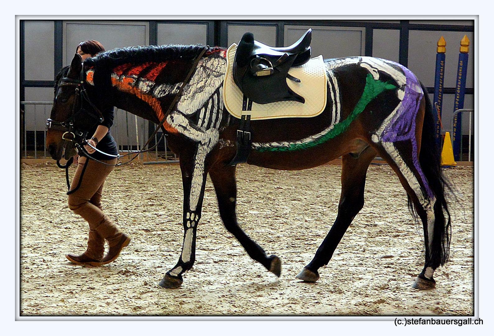 Pferde Anatomie.\