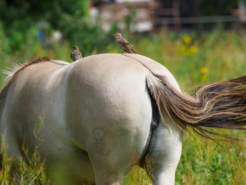 Pferde-Arsch mit Star-Besetzung