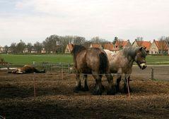 Pferde auf Schiermonnikoog