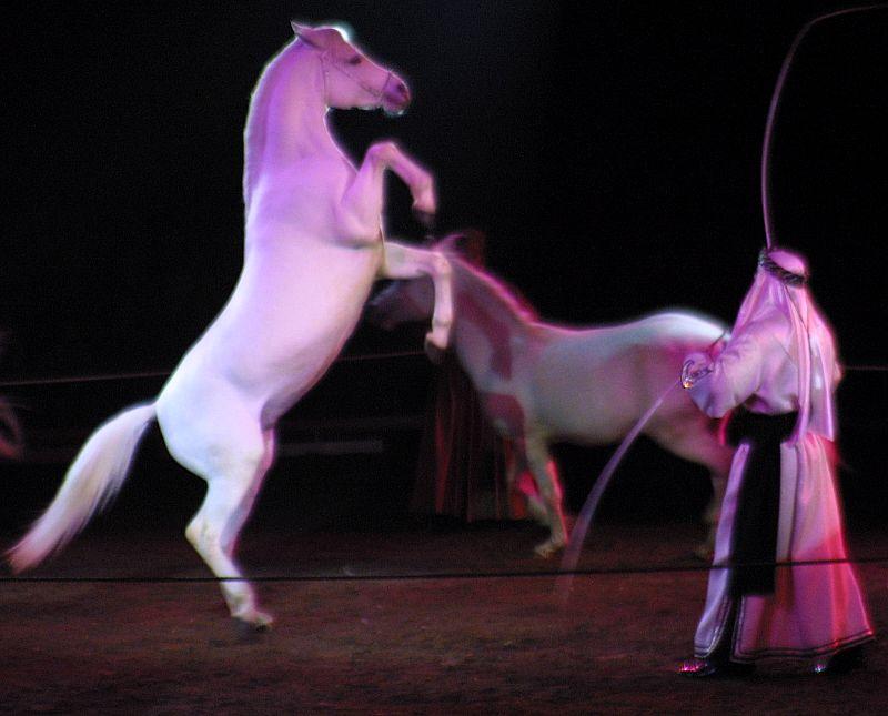Pferde aus dem Zauberwald