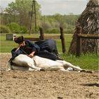 pferde bei der arbeit...