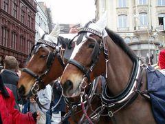 Pferde bei der Fasnacht in Basel | 4