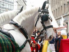 Pferde bei der Fasnacht in Basel | 5