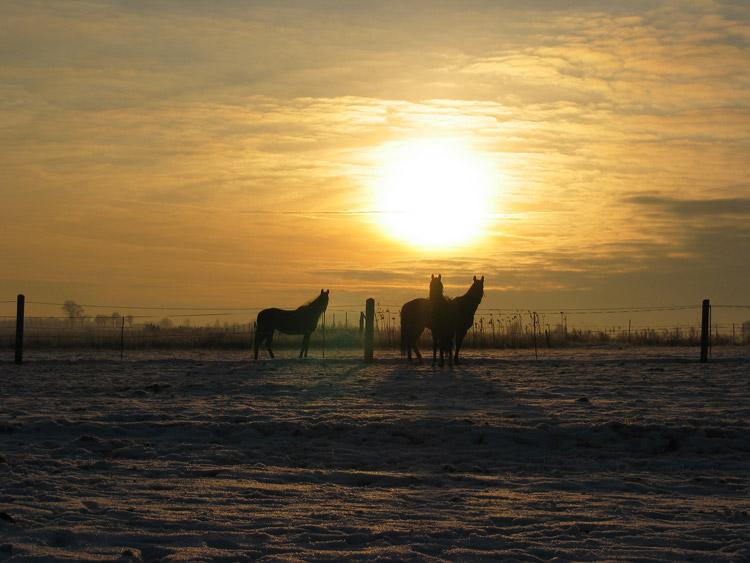 Pferde bei Sonnenuntergang