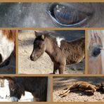 Pferde & ein Esel :-))