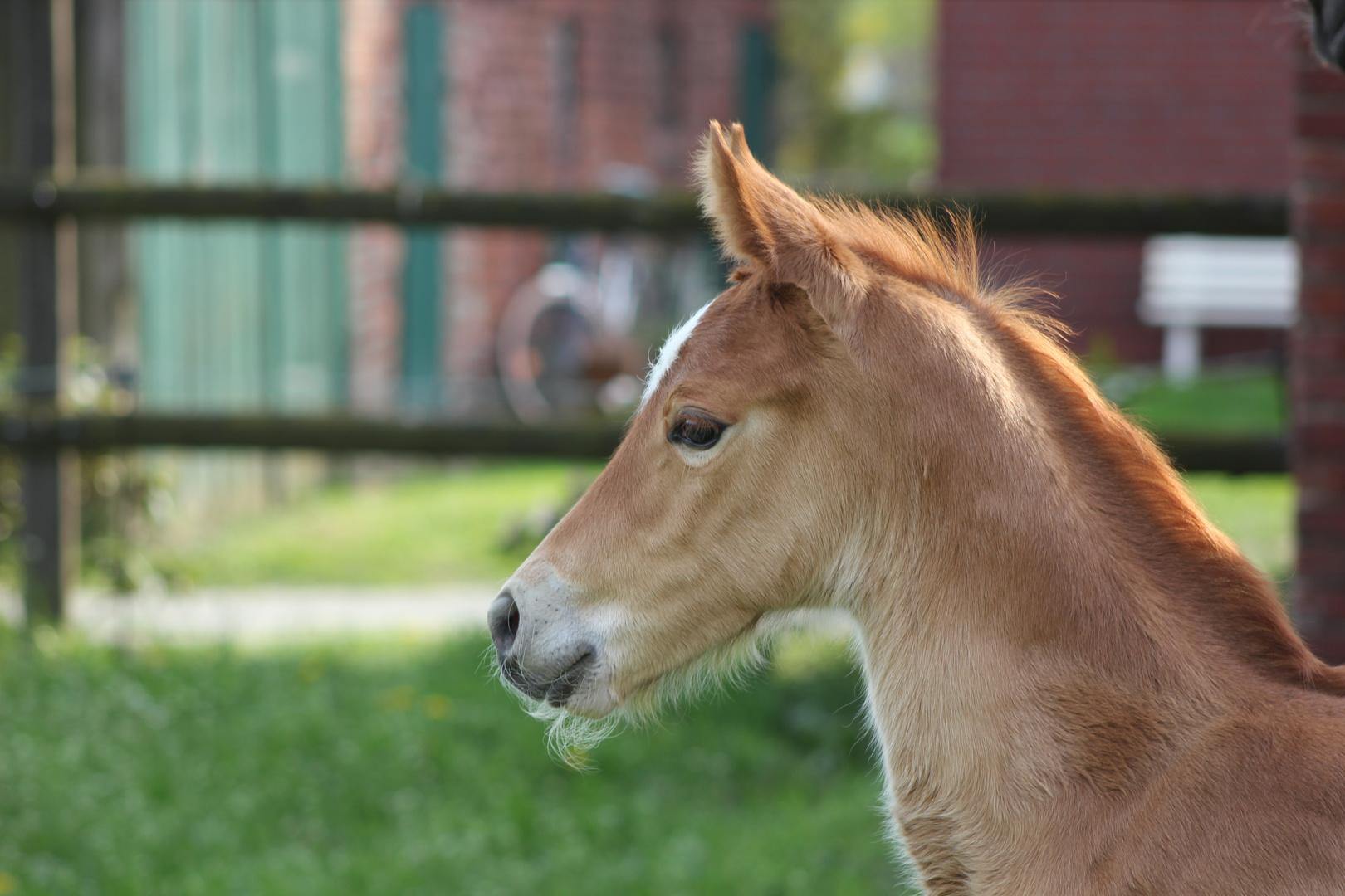 Pferde-Elfenkind