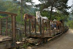Pferde für Andreas