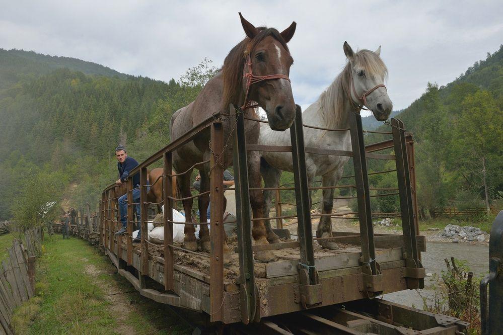 Pferde für Andreas II