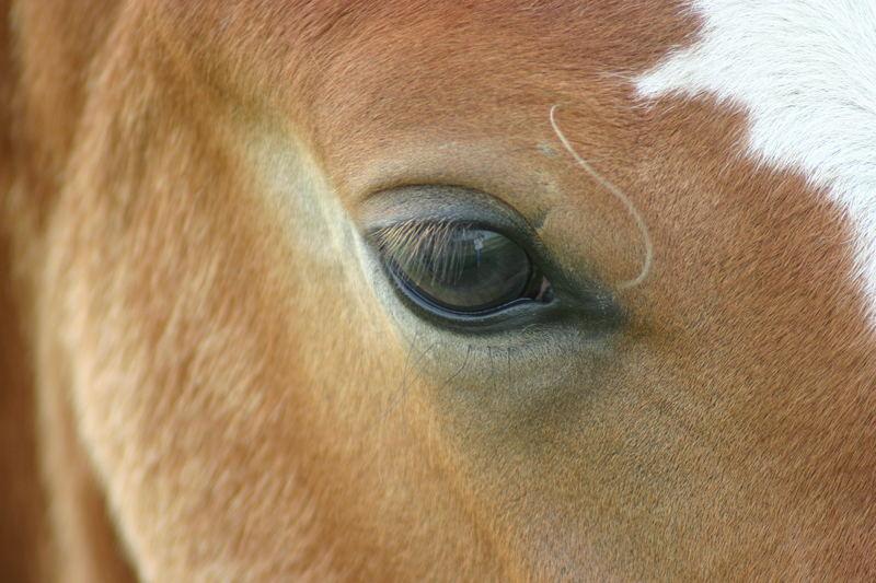 Pferde haben doch wunderschöne Augen ...