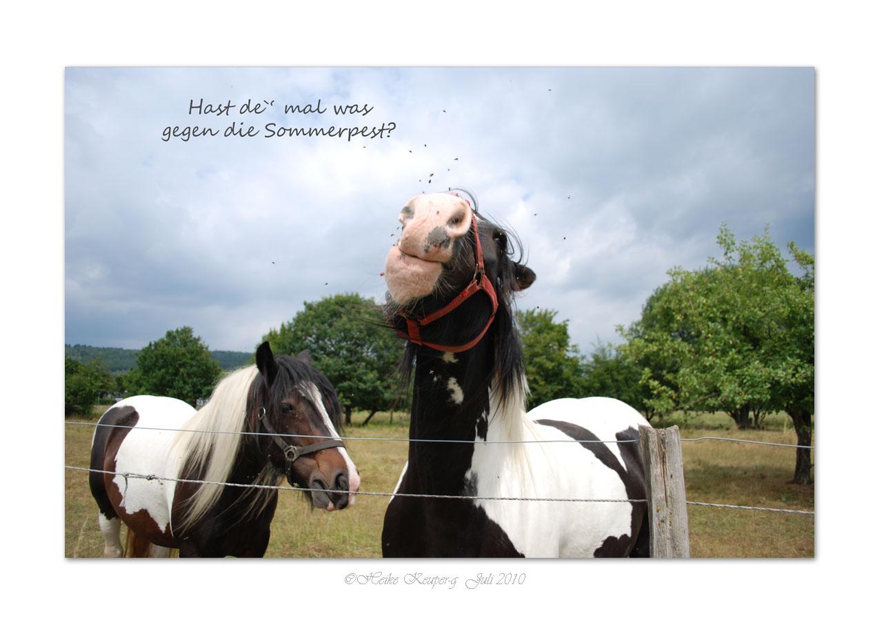 Pferde haben viel Gefühl 31