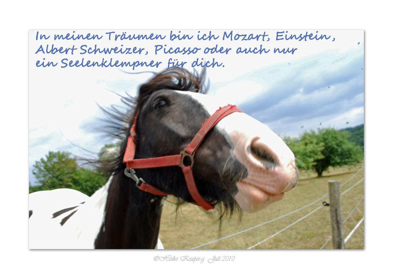 Pferde haben viel Gefühl / In meinen Träumen