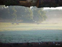 Pferde im Frühdunst