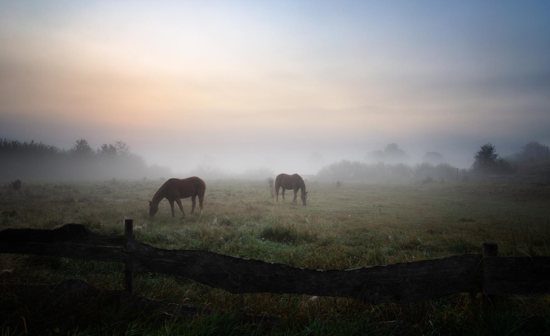 * Pferde im Nebel *