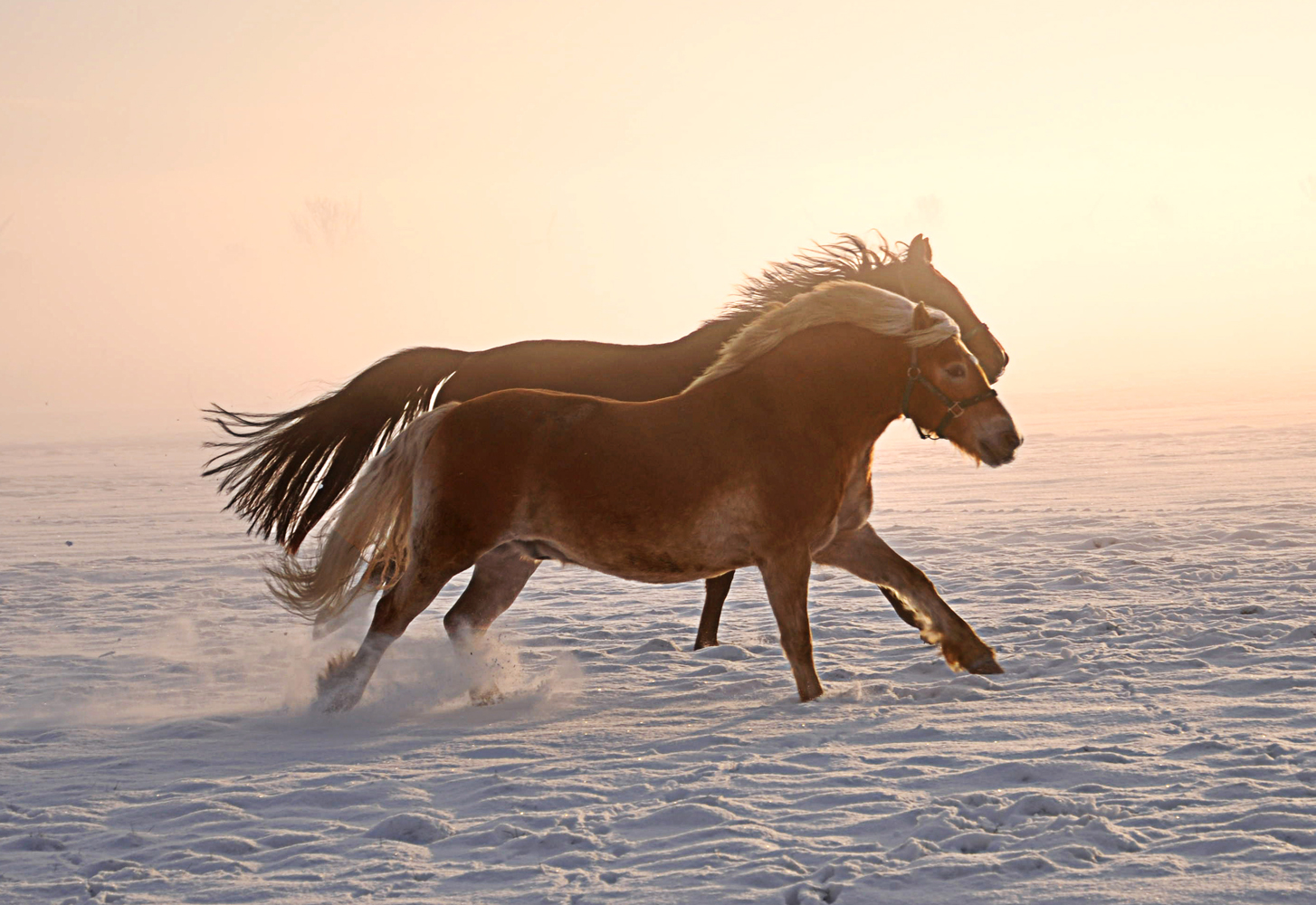 Pferde im Schnee IV