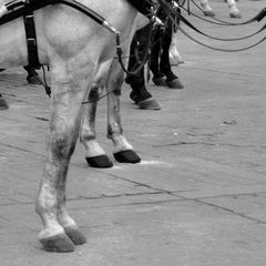 Pferde in Sevilla