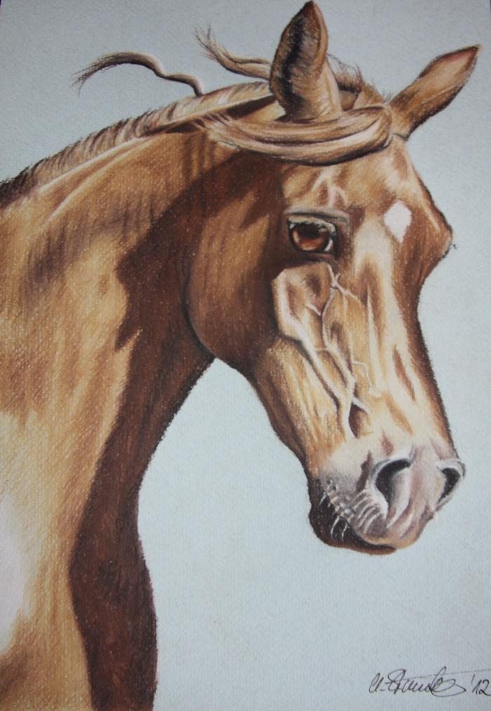 Pferde Kopf