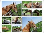 Pferde Koppel