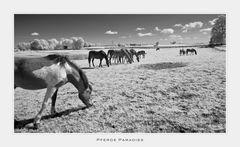 Pferde Paradies