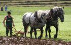 Pferde Stark 2005