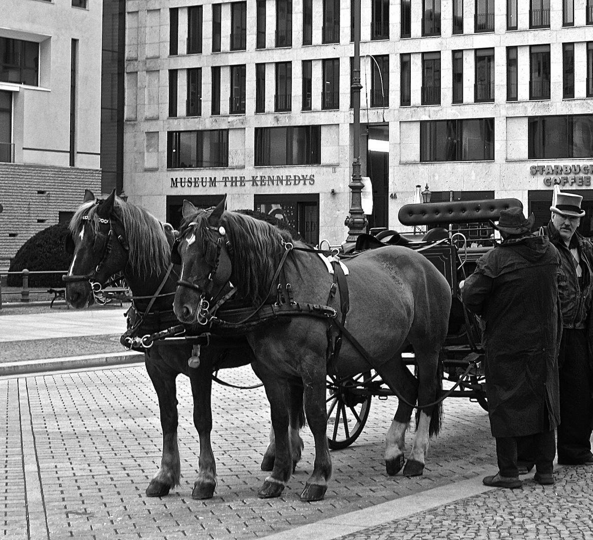 Pferde vor dem Brandenburger Tor