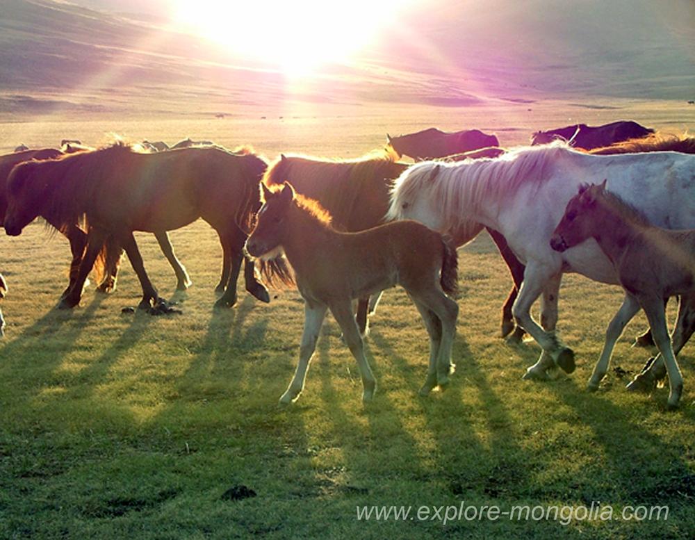 Pferde vor Sonnenuntergang